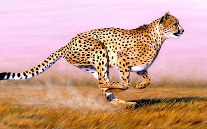 Азиатский гепард: интересные факты, фото и краткое описание