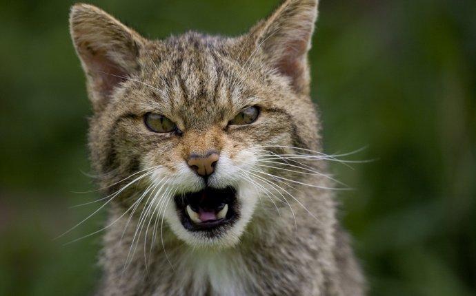 CATFOTO.COM фотографии кошек и котят, дикие кошки, блоги любителей