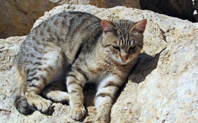 Чем отличается поведение дикой и домашней кошки, попавшей в