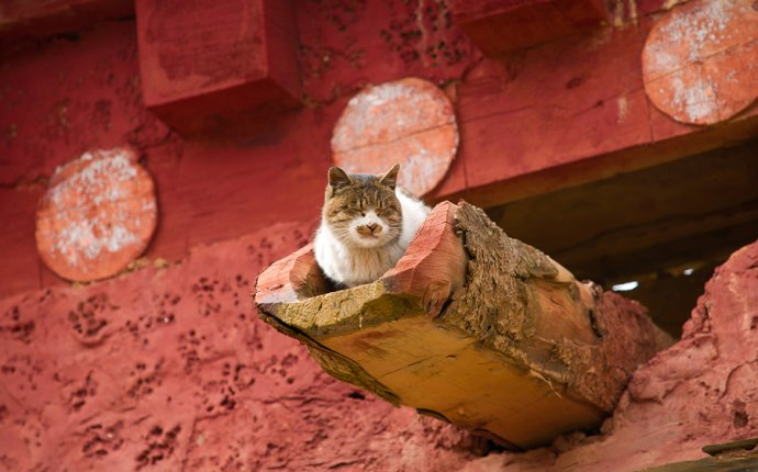 дневники — Кошки — это кошки