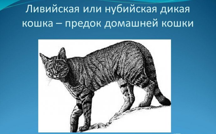 Фото предков домашней кошки