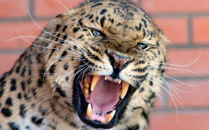 Фотография Не сердите диких кошек / Михаил Борсов / photographers.ua