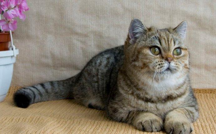 Исследовательская работа по теме Кошки, какой характер диктует