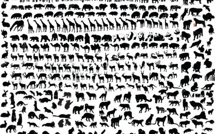 Коллекция диких животных - вектор — Векторное изображение © vule46