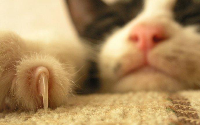 Кошка дикое или домашнее животное? | Dog and Сat | Pinterest