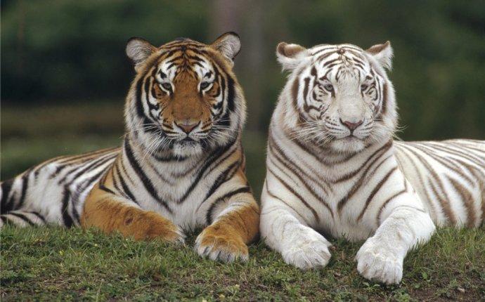 Материалы за Май 2012 года » Удивительный мир природы