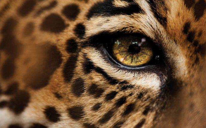 Обои Глаз леопарда, обои для рабочего стола Глаз леопарда