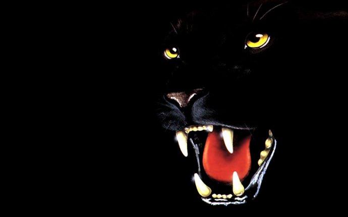 Пантеры Большие кошки Черный Животные Рисованные 800x600