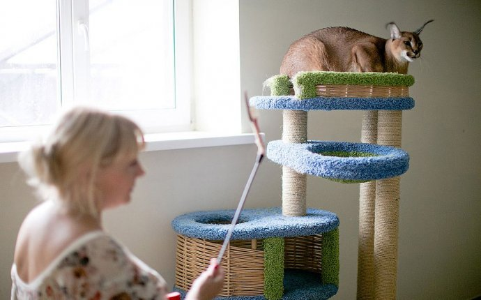 Питомник диких кошек — Блог ветклиники «Айболит Плюс»