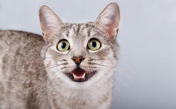 Почему кошки мяукают: 10 причин | Pet4Me.ru