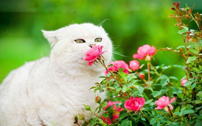 Порода диких кошек фото с названиями (30 фото) | scorpion-cats.ru