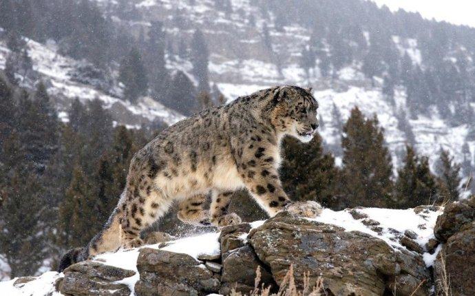 проект ВТБ и Всемирного фонда дикой природы по сохранению редких