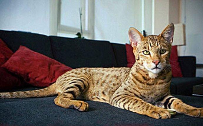 В моде нынче мини-леопарды