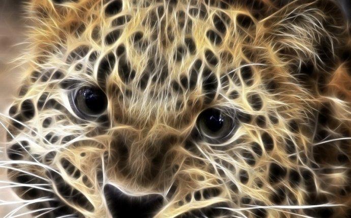 Взгляд леопарда - Фото Животные